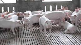 养殖栽培应用案例:家禽、水产、农产品